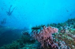 scuba diving similan