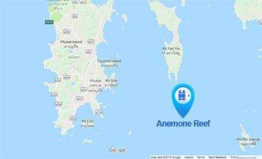 anemone reef phuket diving