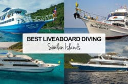12 Best Liveaboard Diving Trips In Similan Islands – Budget, Mid Range & Luxury