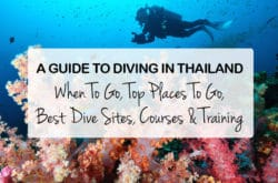A Guide to Diving in Thailand: When To Go, Top Places To Go, Best Dive Sites, Courses & Training