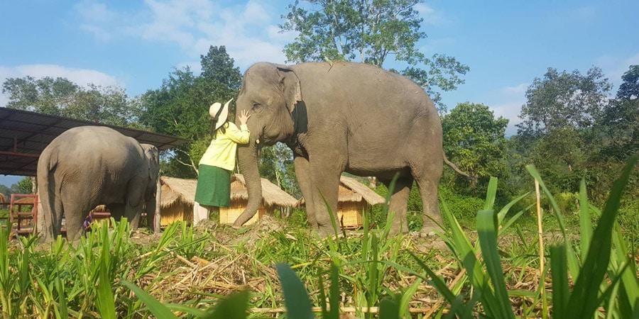 maeklang elephant sanctury