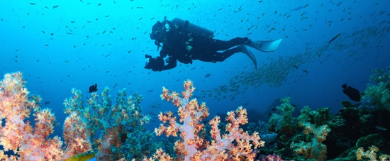 Diving around Phuket