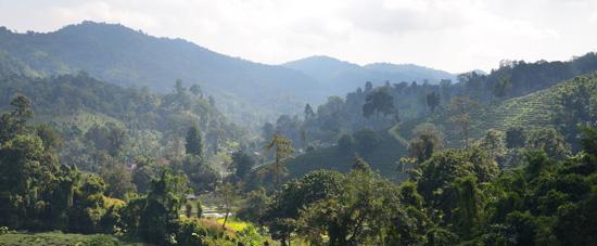 Chiang Rai Jungle trekking