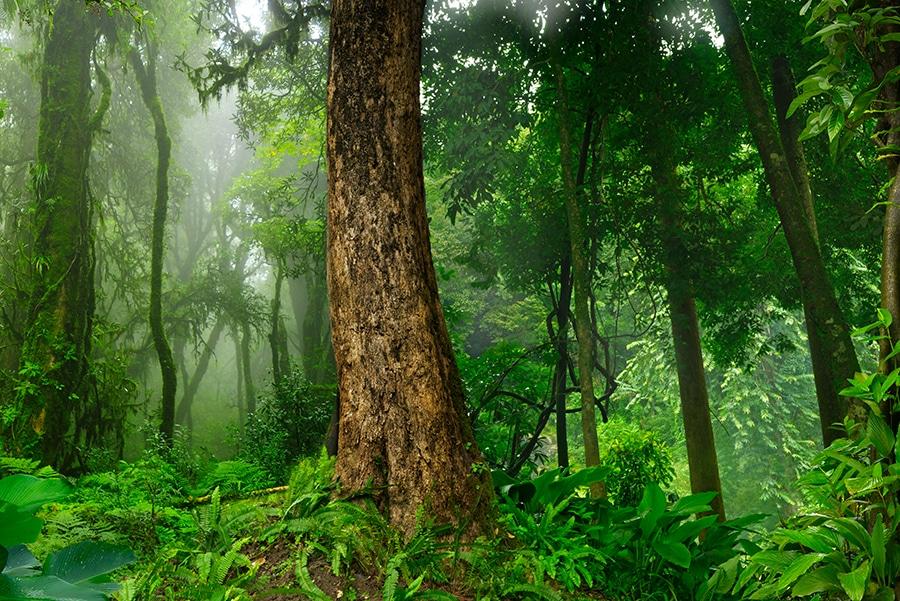 Jungle Trekking, Koh Samui